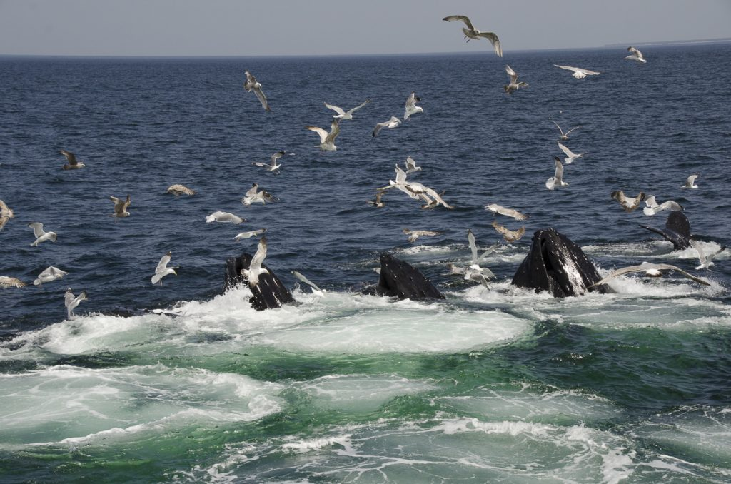Whale Watching, Provincetown, MA